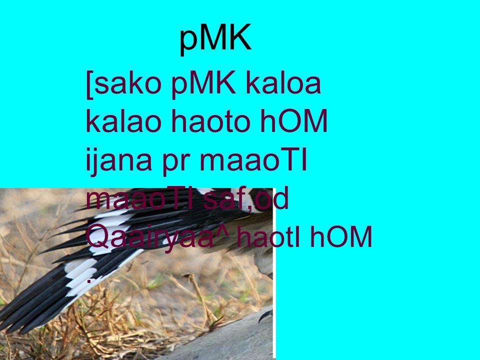 pMK [sako pMK kaloa kalao haoto hOM ijana pr maaoTI maaoTI saf,od Qaairyaa^ haotI hOM .